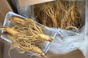 Geumsan vùng trồng sâm tại Hàn Quốc và thời gian mua sâm tươi